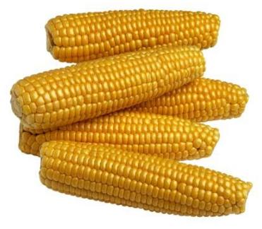 Corn on cob - each