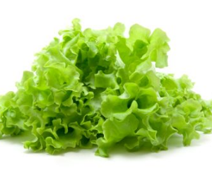 Lettuce Coral - each
