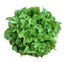 Lettuce Oakleaf Green - each