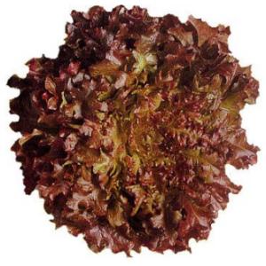 Lettuce Oakleaf Red - each
