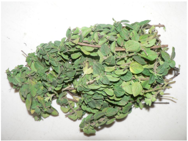 Oregano - bunch