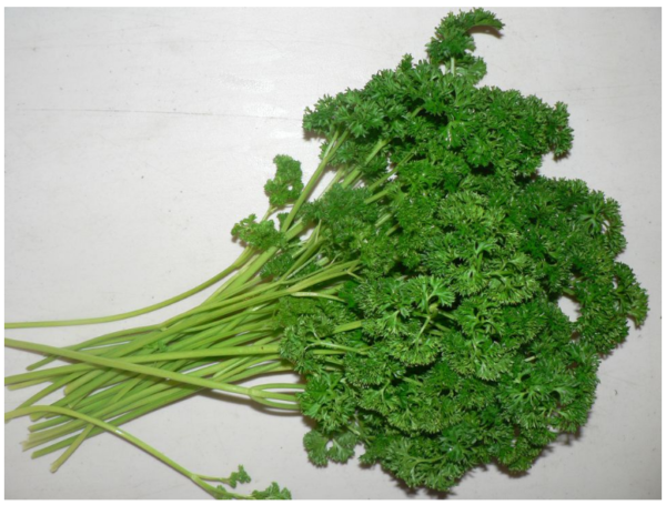 Parsley Curly - per bunch