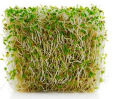 Sprout Alfalfa - 125gm per punnet