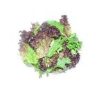 Salad - Mix Gourmet Lettuce - 120gm