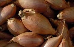 Onions Cocktail (sml) - per 500gm