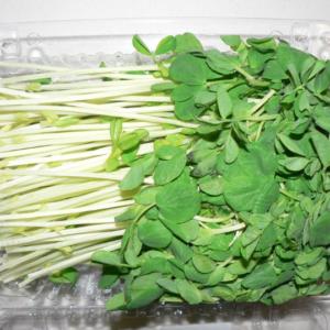 Sprout Snow Pea - per punnet